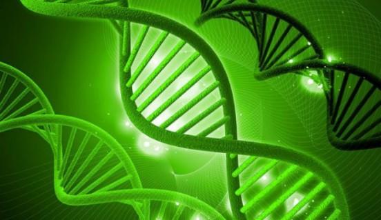 Hemp-DNA-665x385
