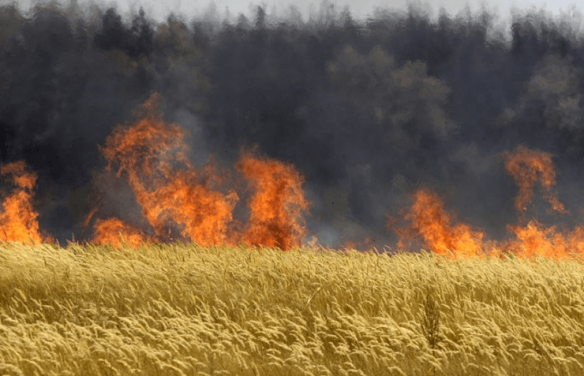 Hungary-Burns-Monsanto-Crops-740x477